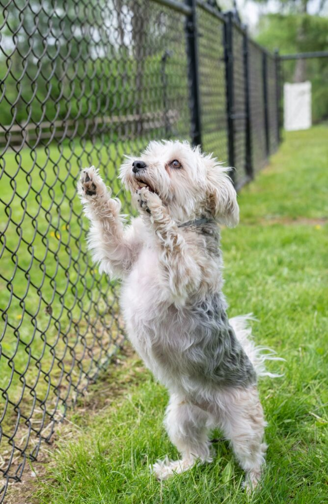 Pet playing safely in fenced area